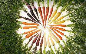 овощи корнеплоды